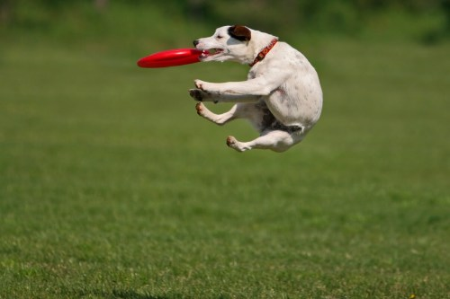 You know you loved to throw a frisbee with your dog when you were a kid. Bring your frisbee, or your dog.  Better yet, bring both. We love dogs! Original Image here