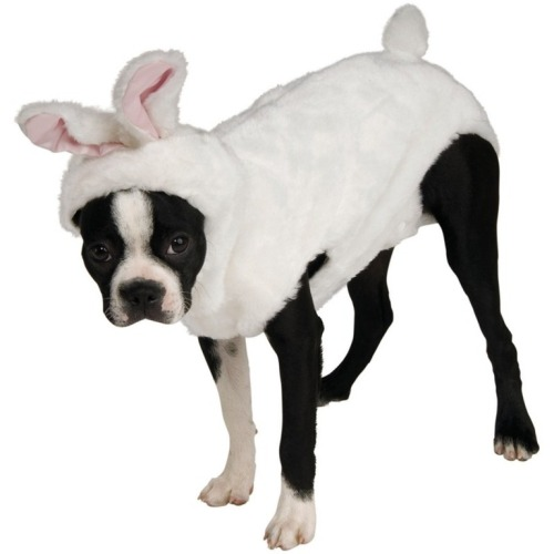 dog-bunny-costume