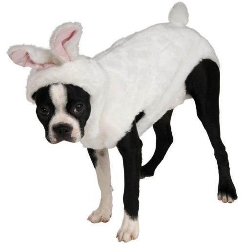 dog-bunny-costume